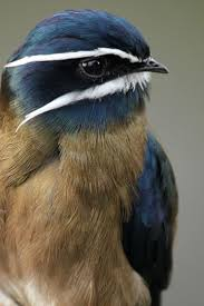 462 best birds images on pinterest beautiful birds animals