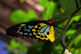 imperfect spirituality beautiful colorful butterfly
