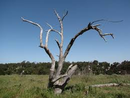 image result for dead trees trees
