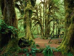 Washington forest images Hall of mosses washington 1600 x 1200 forest photography jpg