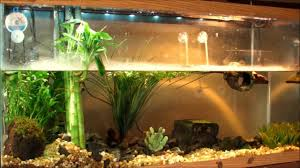 planted turtle tank