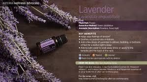 lavender oil dōterra essential oils
