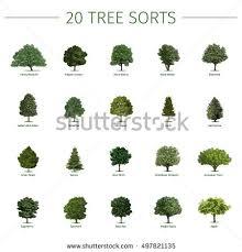 twenty different tree sorts names vector stock vector 497821135