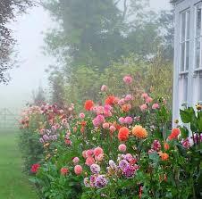garden of ben pentreath bed of dahlias home lawn garden