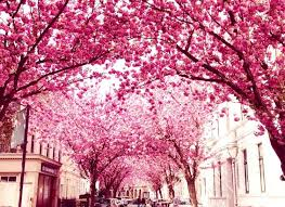 the 23 most gorgeous trees from around the world you won t
