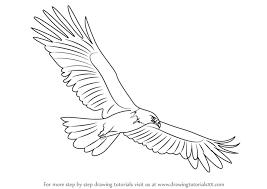 learn draw black eagle birds step step drawing