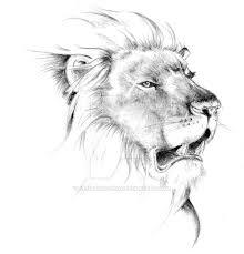 lion sketch by venatorfend on deviantart