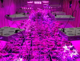 raysace full spectrum led grow lights