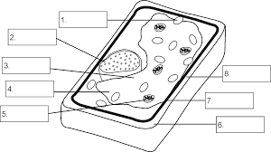 grade 9 structure of a plant cell by openstax quizover com