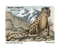 snow leopard inhabitat jpg