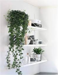 Fragrant Indoor Plants Low Light - 11 best indoor vines and climbers you can grow easily in your home