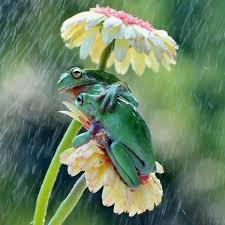 imagenes lindas naturaleza mejores 194 imágenes de animales en pinterest pájaros bonitos
