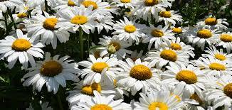 montana native plants indoor u0026 oudoor plants seasonal flowers u0026 plants pottery u0026 gifts