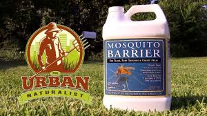urban naturalist garlic mosquito spray treatment youtube