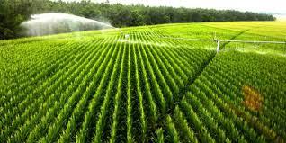 irrigated corn indiana michigan corn at peak need for water says irrigation
