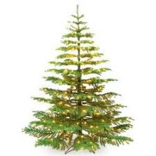 noble christmas tree 7 best noble fir christmas tree images on christmas