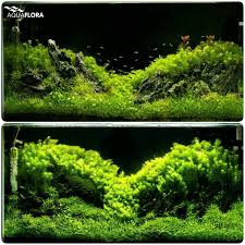 Aquascape Chicago 2726 Best Aquascaping Tanks Images On Pinterest Aquascaping