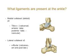 Lateral Collateral Ligament Ankle Anatomy Of The Knee Lower Leg And Foot Ppt Video Online Download