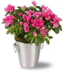 mothers day plants s day plant delivery send a plant at from you flowers