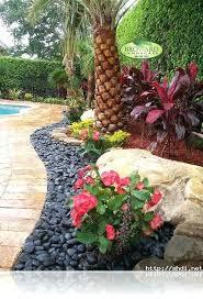 palms for small gardens u2013 exhort me