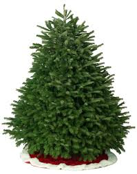 fraser fir christmas tree fresh cut christmas trees and garland