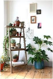 planters cactus garden ideas pot plant container cactus planter