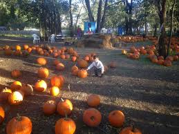ee wen s tales pumpkin patches
