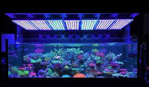 amazing japanese reef tank under atlantik v4 led lighting u2022orphek