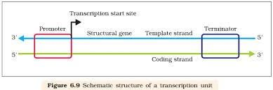 what is the difference between coding and non coding dna