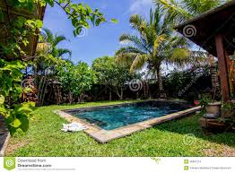 swimming pool and palm trees in the backyard stock images image