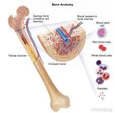 chronic lymphocytic leukemia treatment pdq u2014patient version