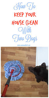 How To Keep House by How I Keep My House Clean With Two Dogs Communikait