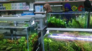 Aquascape Shop Floratic Visiting Aquascape Paradise At Shah Alam
