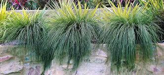 grasses flower power
