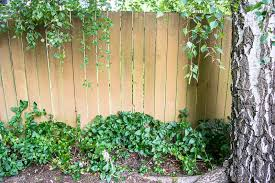 Trellis With Vines Diy Fence Trellis Pretty Handy