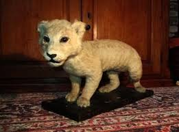 lions for sale one from my own taxidermy collection taxidermy lion cubs