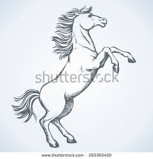 horse tail stock images royalty free images u0026 vectors shutterstock