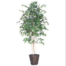 cheap bay tree in pot find bay tree in pot deals on line at