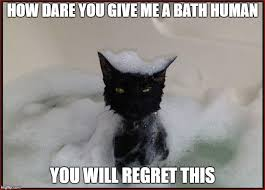 Angry Cat Meme - angry wet cat imgflip