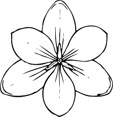 clipart crocus flower top view