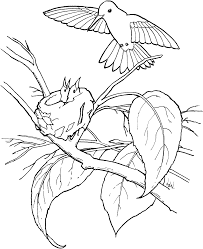 free printable hummingbird coloring pages for kids 21474
