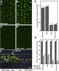 hlb1 is a tetratricopeptide repeat domain containing protein that