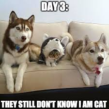 Funny Husky Memes - nutmeg the cat 31 years old cat the world oldest living cat