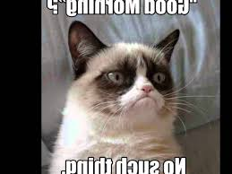 Grumpy Cat Meme No - most up to date cat memes memes vault angry cat memes no with cat