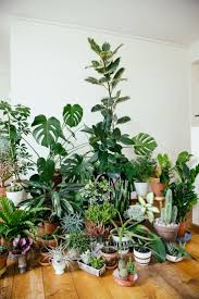126 best plants images on pinterest plants gardening and indoor