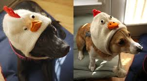 can dogs eat thanksgiving turkey steph u0026 tony investigate 2011 november