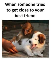 Funny Best Friend Memes - 24 top memes you should dedicate to your best friend