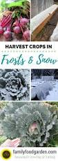 cold hardy crops for frosts u0026 snow