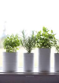 window sill herb garden u2014 kendra castillo