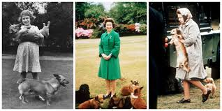Queen Elizabeth Dogs 12 Life Lessons We Can All Learn From The Royal Family Royal